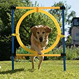 PAWISE Pet Dogs Outdoor Games Agility Exercise