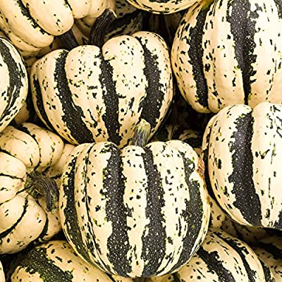 Sweet Dumpling Winter Squash Garden Seeds - Heirloom, Non-GMO - Vegetable Gardening Seed