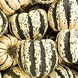 Sweet Dumpling Winter Squash Garden Seeds - 1 Lbs - Heirloom, Non-GMO - Vegetable Gardening Seed
