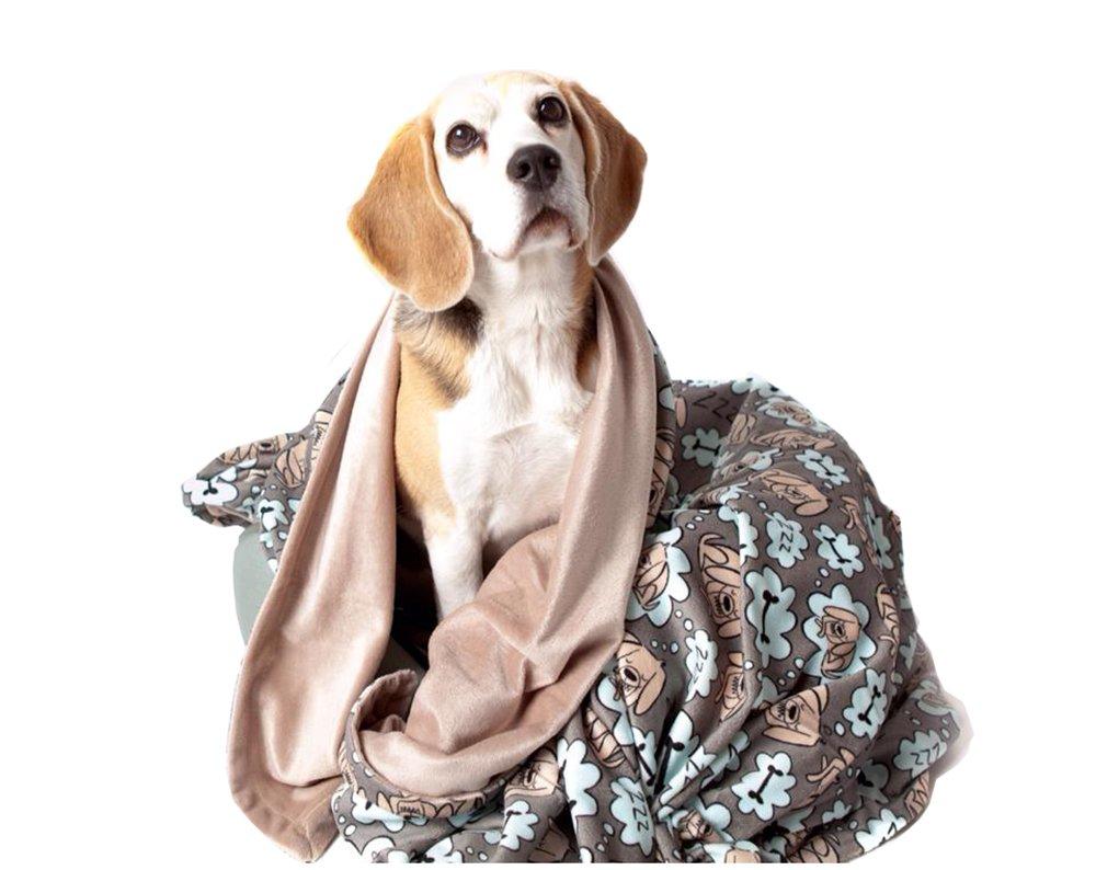 UTEX Premium Microfiber Pet Blanket, for Small/Medium/Large Dogs, Puppy  Kitten Bed, Warm, Soft, Plush