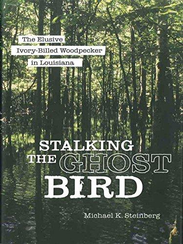 Stalking the Ghost Bird: The Elusive Ivory-Billed Woodpecker in ()