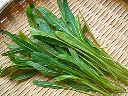 200//2000 Seeds Mizuna Red Mustard Japanese Flavor Spicy Salad Soup