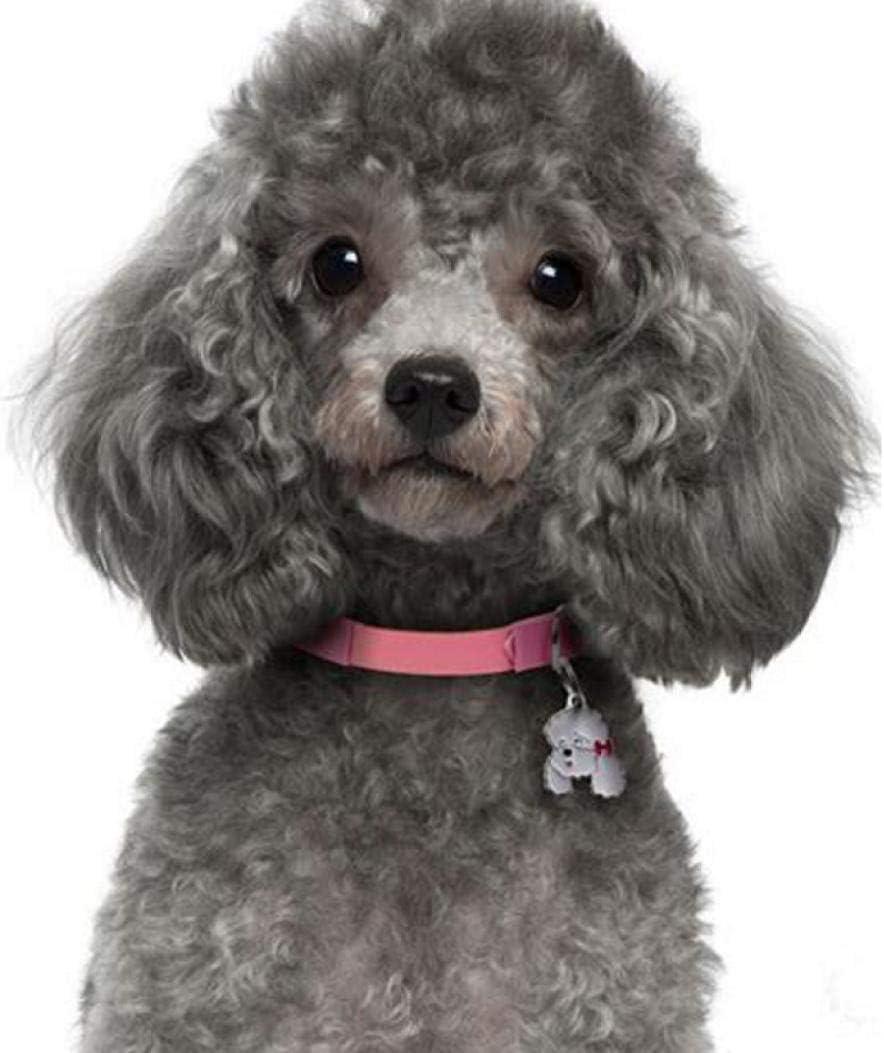 Pintura Diamante Perro lindo Imagen para mascotas Diamante Bordar
