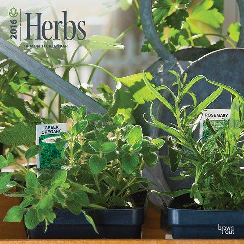 Download Herbs - 2016 Calendar 12 x 12in pdf