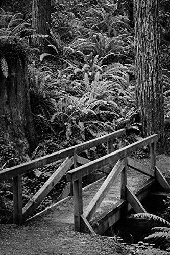Redwood Bridge I, Fine Art Photograph By: Vitaly Geyman; One