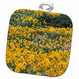 3dRose Danita Delimont - Flowers - Wildflowers, Willard Basin near Mantua, Utah, USA - US45 HGA0382 - Howie Garber - 8x8 Potholder (phl_147283_1)