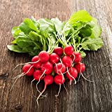 Cherry Belle Radish Seeds - 25 Lb Bulk Seed - Heirloom Garden Seeds, Non-GMO, AAS Winner - Vegetable Gardening and Micro Greens