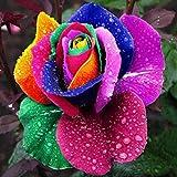 iDealhere(TM) 600pcs Coloré Graines De Rose Arc-en-ciel Semer Fleur Plante Jardin Rainbow