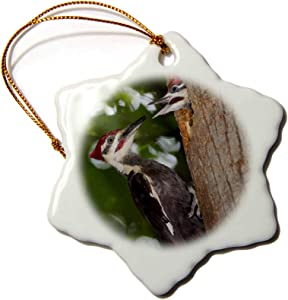 3dRose USA, Pileated Woodpecker Bird - US39 JMC0095 - Joe and Mary Ann. - Ornaments (ORN_146454_1)