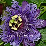 100Pcs Exotic Passion Fruit Seeds Purple Passiflora edulis seeds Passion Flower Outdoor plant
