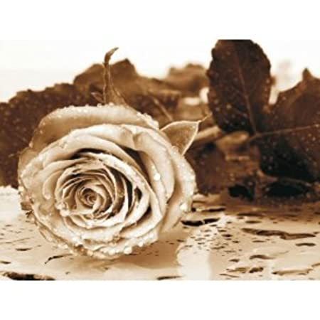 Wall Mural Photo Wallpaper Sad Rose 368x254cm Large Size