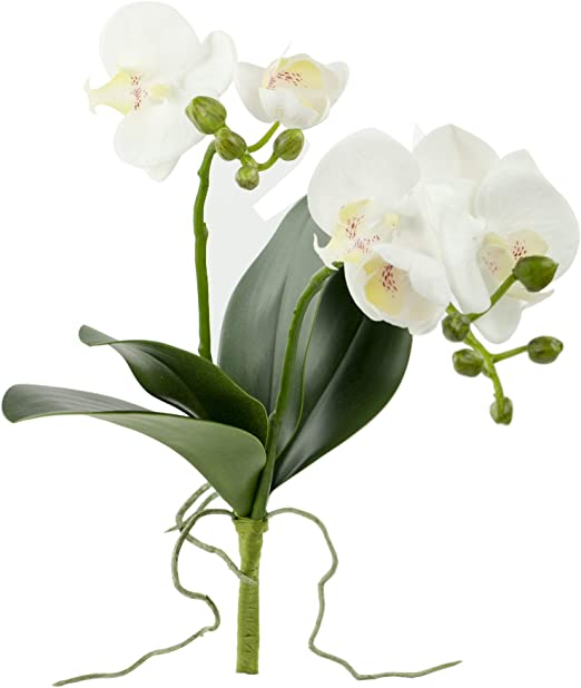 Silk Green Phalaenopsis Orchid with Leaves