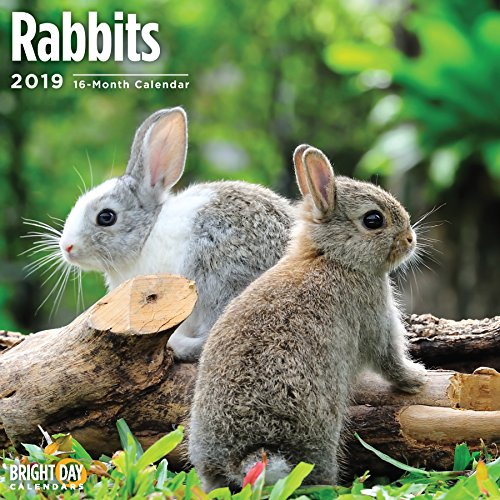 Farm Animals Wall Calendars by Bright Day Calendars 16 Month Wall Calendar 12 x 12 Inches (Rabbits 2019)