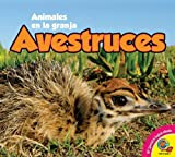Avestruces, Anita Yasuda, 1621275892