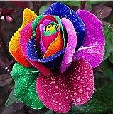 auto sprouter - 200pcs Rare Holland Colorful Rainbow Rose Flower Seeds Home Garden Plants Decor