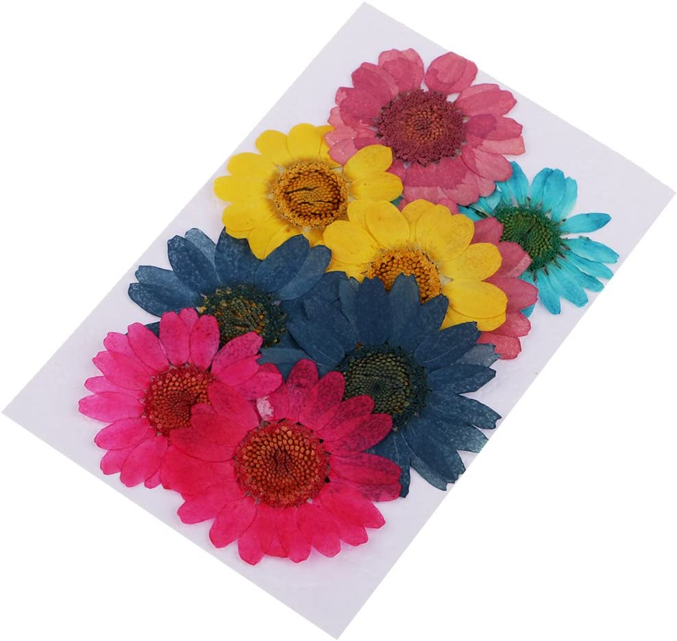 10pieces Mixed Size Shapes Styles Pressed Invite Card Decors Dried Flowers Leaf Leaves Herbarium for Resin Casting Art Creation Chrysanthemum