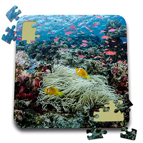 (3dRose Danita Delimont - Underwater - South Pacific, Solomon Islands. Reef of Fish and Corals. - 10x10 Inch Puzzle (pzl_314022_2))
