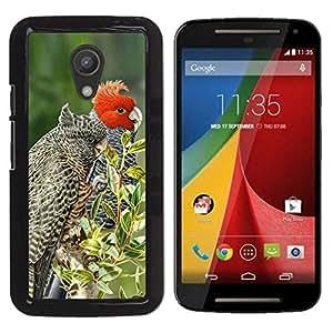 Las plumas pájaro rojo árboles Naturaleza Primavera- Metal de aluminio y de plástico duro Caja del teléfono - Negro - Motorola G 2ND GEN II