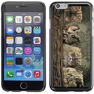 coverup centro Premium impresión duro caso piel cubierta para Apple Iphone 6(4,7)–lindo del búho y Fluffy Cat