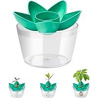 HENMI Tazón de Plantación de Semillas de Aguacate Kit,Planta tu Propio Arbol de Aguacate,Adecuado para Plantar Regalos…