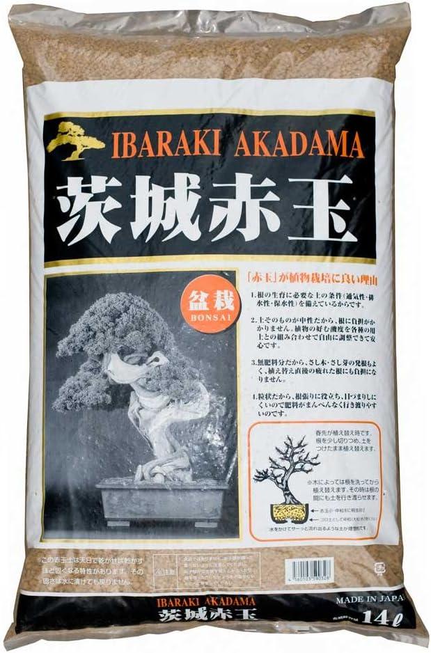 bonsai olmo chino