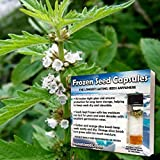 Gipsywort Seeds (Lycopus europaeus) 20+ Rare Medicinal Herb Seeds + FREE Bonus 6 Variety Seed Pack - a $29.95 Value! Packed in FROZEN SEED CAPSULES for Growing Seeds Now or Saving Seeds for Years