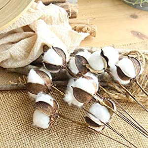 Gotian 21inch Naturally Dried Cotton Stems Flower, Farmhouse Style Artificial Flower Filler Floral Decor 4