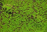 Reality In Scale Wild Grass & Hills Type 3 - Dark Brown Earth Light Green #MAT09