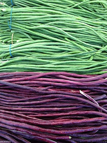 Yard Long Bean, Mix Seed (Vigna Unguiculata subsp sesquipedalis) Red & Green 10 Seeds by SS0074
