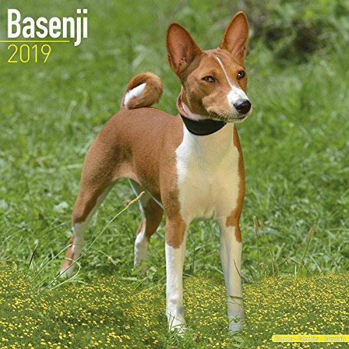 Basenji Calendar 2019 - Dog Breed Calendar - Wall Calendar 2018-2019