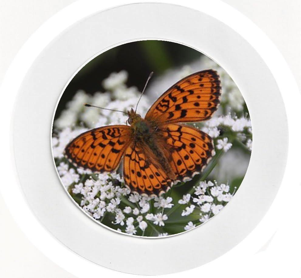 Orange Butterfly Reuseable Car Tax Disc Holder