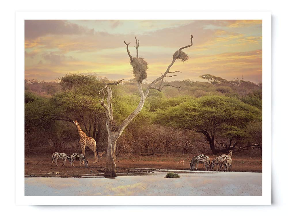 African Waterhole - Wildlife Photograph Animal Picture Home Decor Wall Nature Print - Variety of Sizes Available