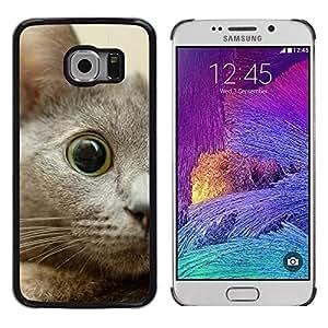 Be Good Phone Accessory // Dura Cáscara cubierta Protectora Caso Carcasa Funda de Protección para Samsung Galaxy S6 EDGE SM-G925 // Nebelung Kitten Eye Cat Russian Blue