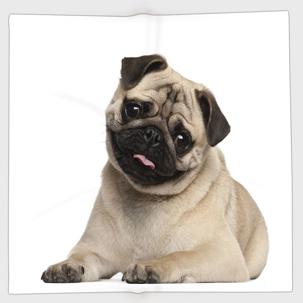 Cotton Microfiber Hand Towel,Pug,Nine Months old Pug Puppy Lying Around Cute Pet Funny Animal Domestication Print Decorative,Pale Brown Black,for Kids, Teens, and Adults,One Side Printing