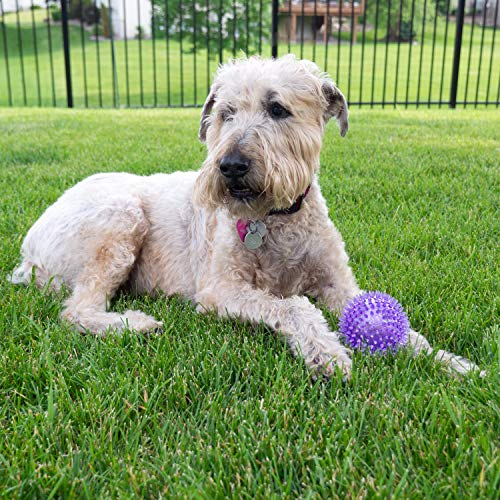 Gnawsome Medium Squeaker Ball Dog Toy
