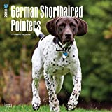 German Shorthaired Pointers International Edition 2018 12 x 12 Inch Monthly Square Wall Calendar, Animals Dog Breeds