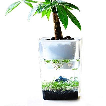 Acuario de acrílico ecológico de Leking, acuario de escritorio, acuario, pescado simbiótico con