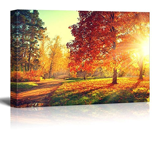 Autumn Scene Fall Trees in Sun Light Wall Decor