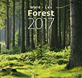 Forest Wall Calendar – Calendars 2016 – 2017 Calendar – Nature Wall Calendar -Photo Calendars – Photo Calendar By Helma
