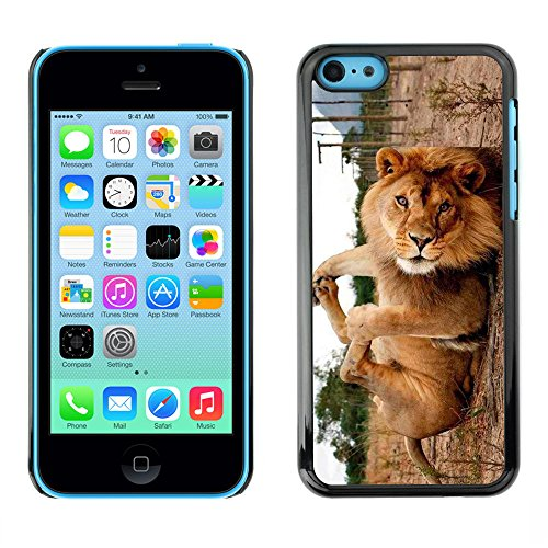 Omega Case PC Polycarbonate Cas Coque Drapeau - Apple iPhone 5C ( Cute Funny Lion Playing )