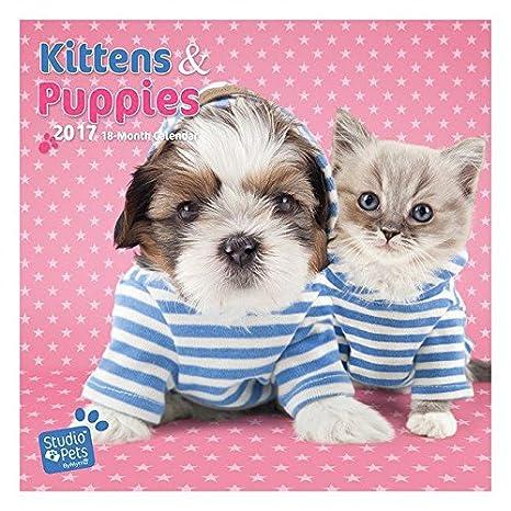 Calendario 2017 cachorro y gatito Myrna - Cachorros ...