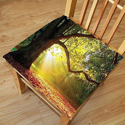 Nalahome Set of 2 Waterproof Cozy Seat Protector Cushion Leaves Forest Decor Majestic Mighty Oak Tree with Largely Broader Sun Beams Rays Nature Green Light Yellow and Orange Printing Size - Oak Leaf Sunglasses