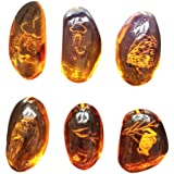 VORCOOL 5pcs Amber Fossil with Insects Samples Stones Crystal Specimens Home Decorations Collection Oval Pendant (Random…