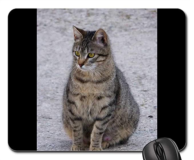 Amazon.com : Mouse Pads - Gata Cat Feline Pregnant Brindle ...