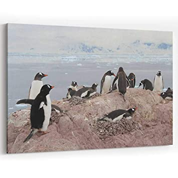 Amazon com: Gentoo Penguins in Neko Harbor Canvas Prints Wall Art