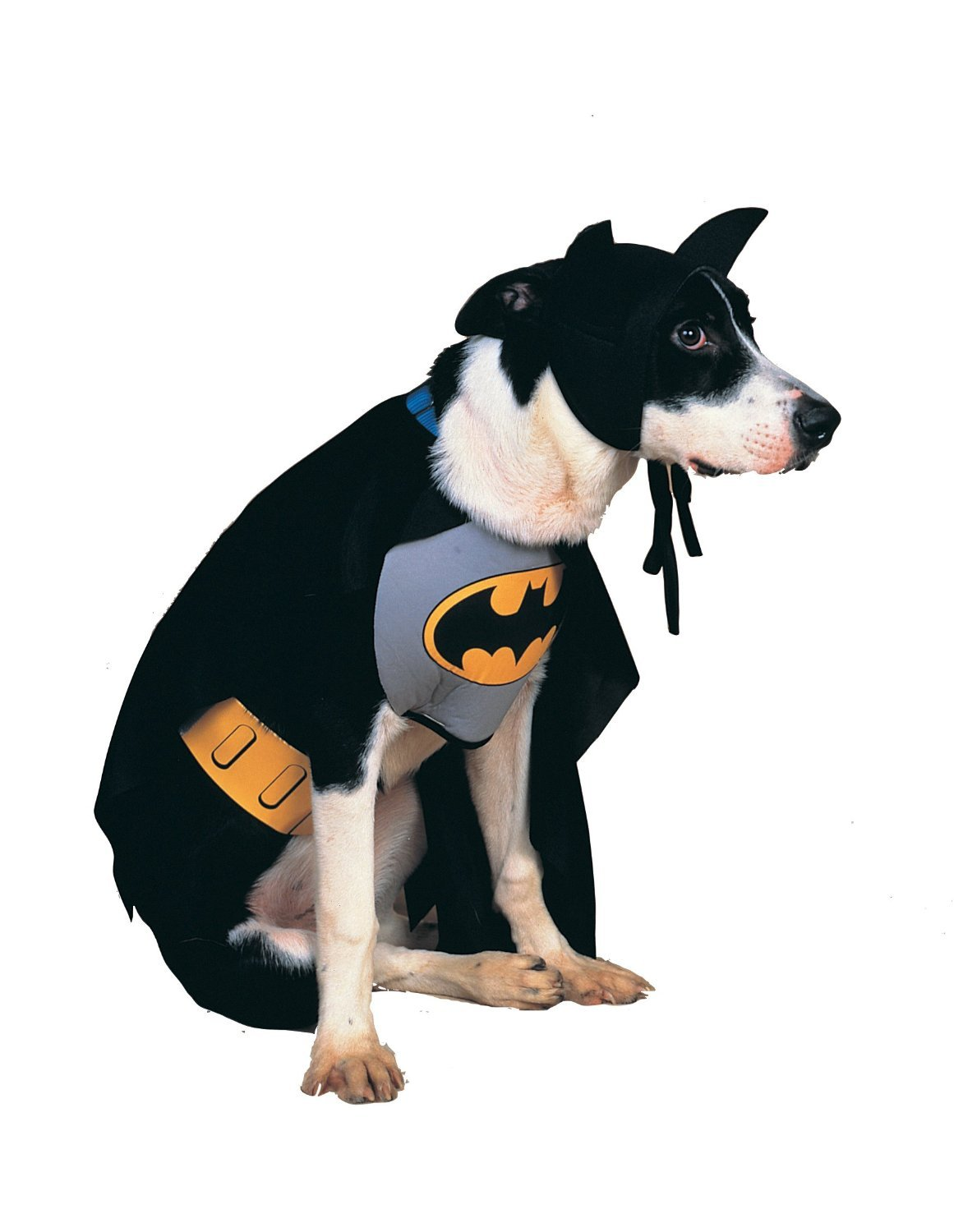 Amazon.com: DC Comics Pet Costume, Classic Batman, Medium: Pet ...