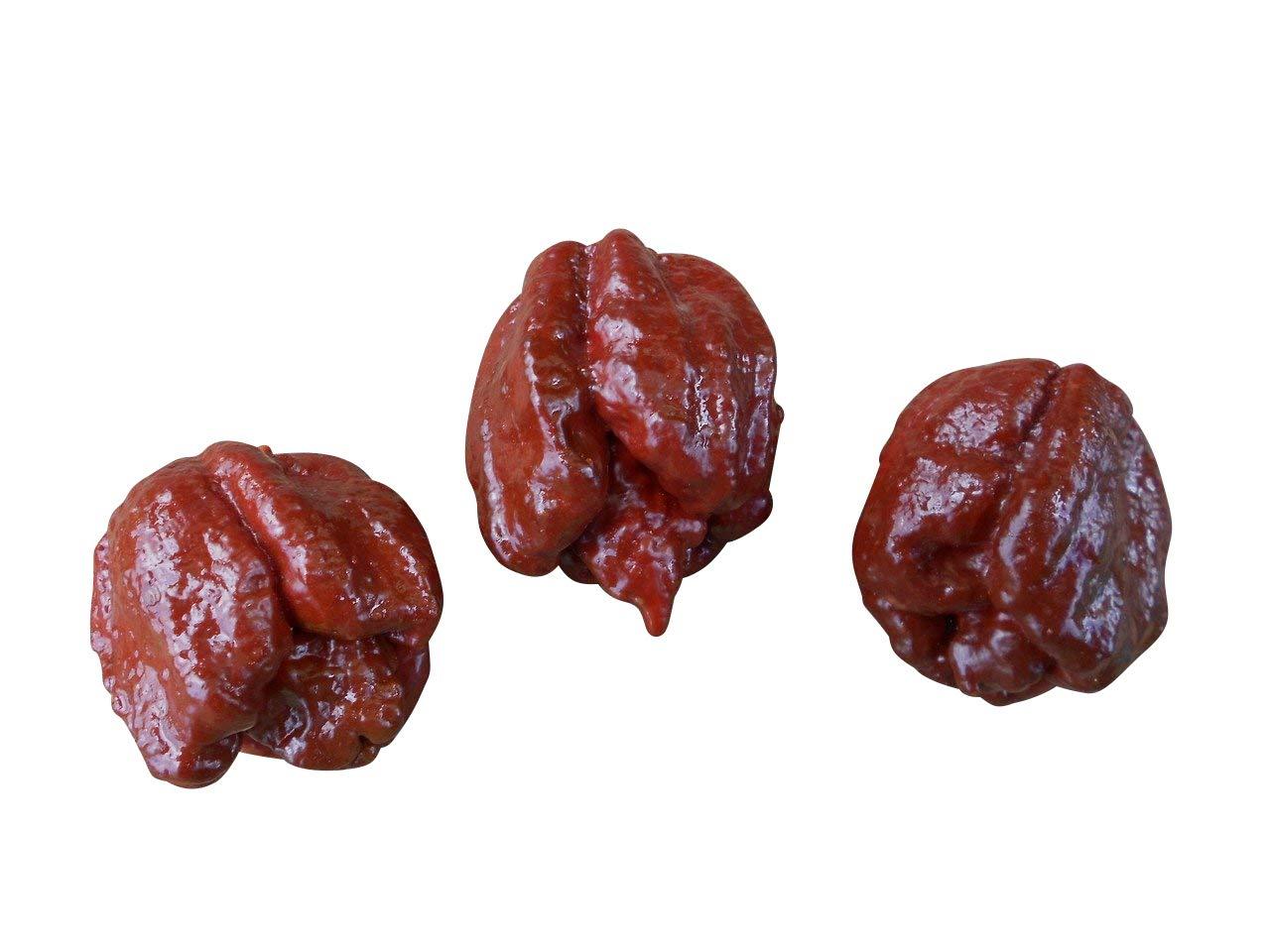Chocolate Moruga Scorpion 10 Samen (War bis vor kurzen noch die schärfste Chli der Welt) mit 2.000.000 Scoville Von ''Samenchilishop''
