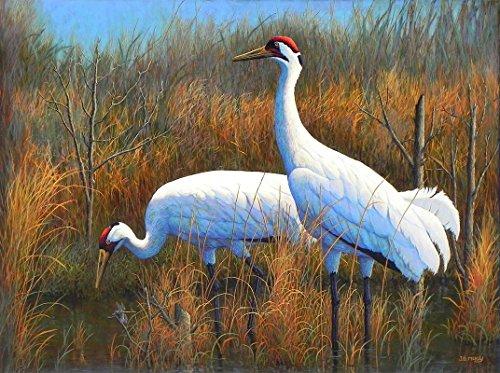 Paintings Crane Gallery (Apparition At Aransas)