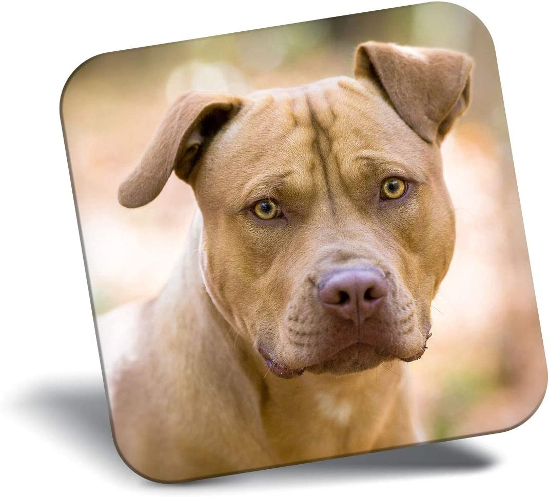 Destination Vinyl ltd Awesome Fridge Magnet - American Pit Bull Puppy Dog Animals 8634