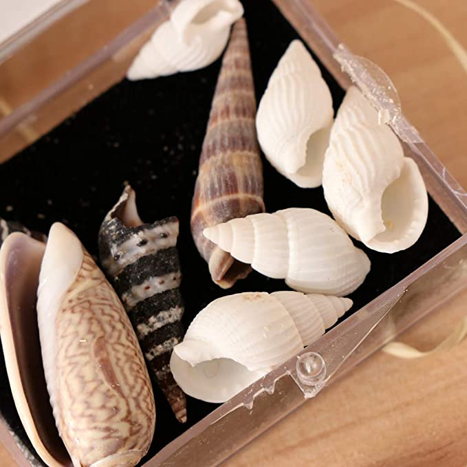 Sea Shells Specimens Collection Biology Science Kit Home Classroom Decor